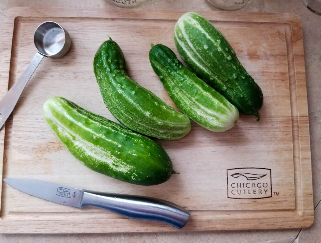 Pickling cucumbers on the cutting board before being cut into slices
