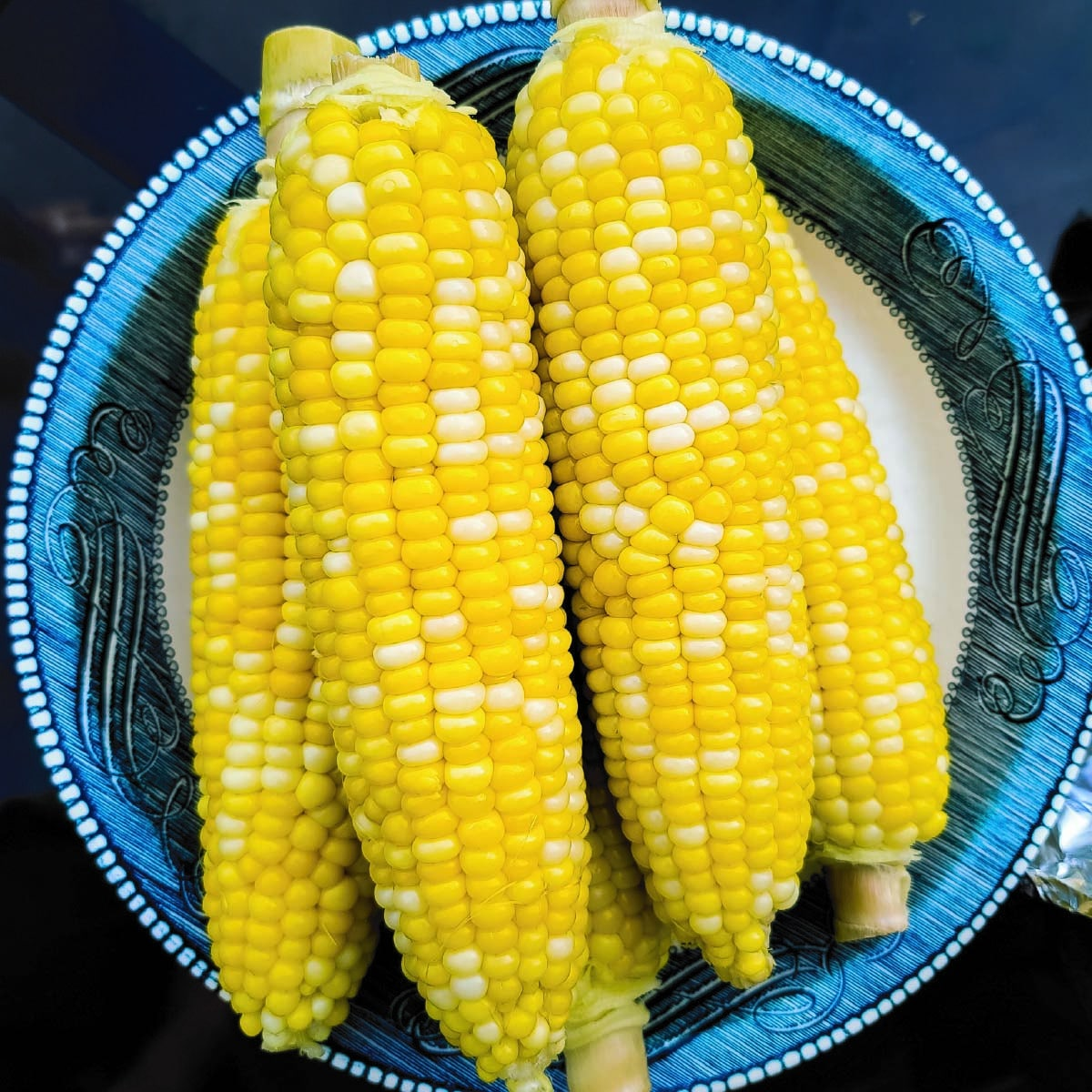 Ears of corn on the cob sitting in a dish after cooking ready to be served.